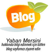 Yaban Mersini Blog