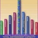 Doğal yaban mersini antioksidan oranı