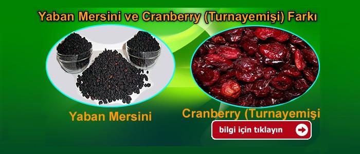 Yaban Mersini ve Cranberry Farkı