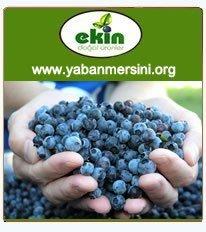 Ekin Doğal Ürünler - Yabanmersini.org